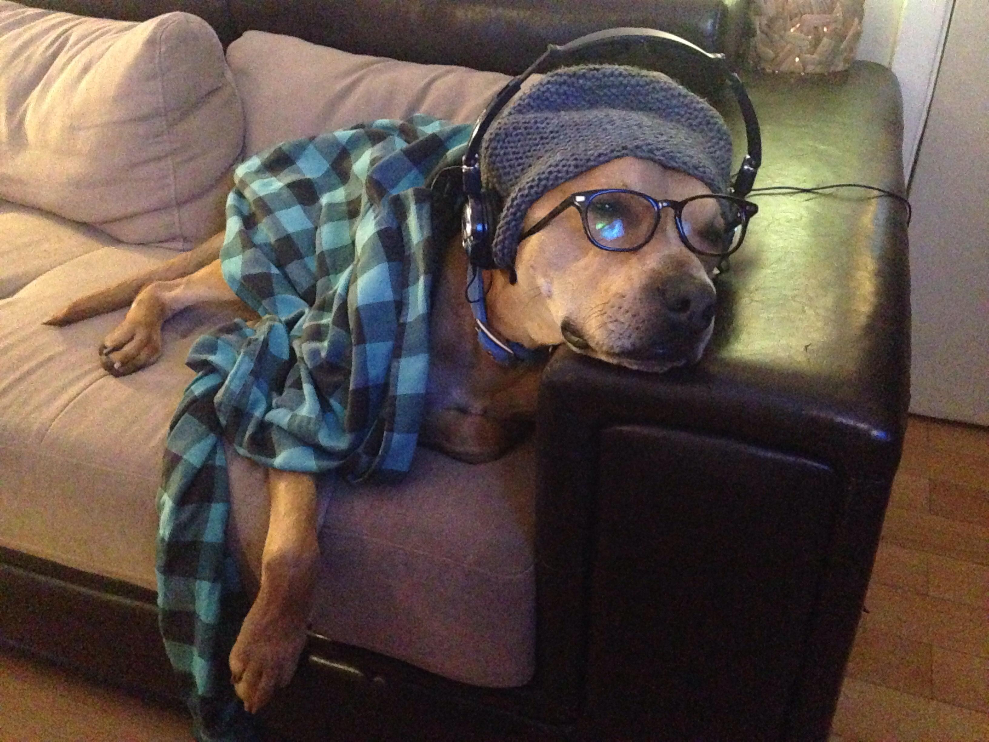 dog dressed in shirt and headphones